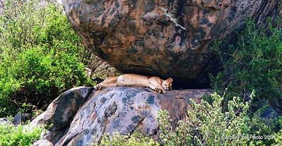 Sleepy head, Serengeti
