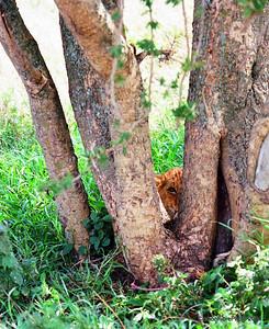 Shy Simba, Serengeti