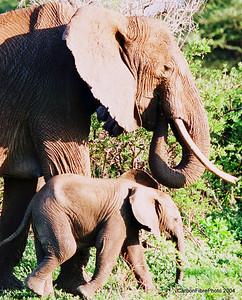 Mother and Baby Elephant, Lake Maynara, Tanzania