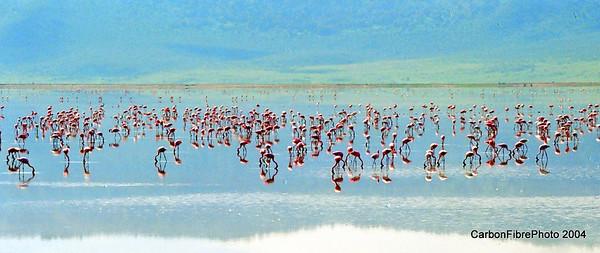 Cranes, Ngorongoro Gorge, Tanzania