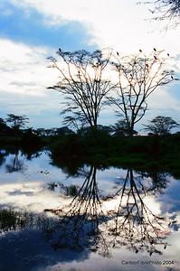 Evening, Serengeti watering hole