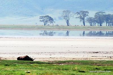 Black Rhino, Ngorongoro Gorge, Tanzania