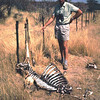 Skeleton of a kudu that died after being entangled in a fence in Namibia.