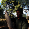PH Johnny Uys holds fruit from a sausage tree. I have read that elephants get tipsy after eating the fermented fruit.