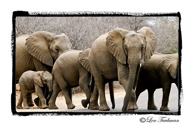 Elephant Family Framed