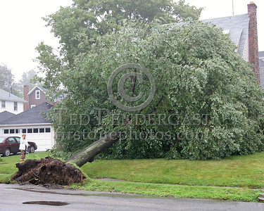 Another Tree Down, This One On Munroe St. In Belmont,Mass.