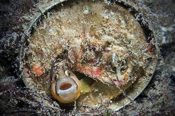 FÖRELÄSNING: Västerhavet under ytan - en hotad skönhet