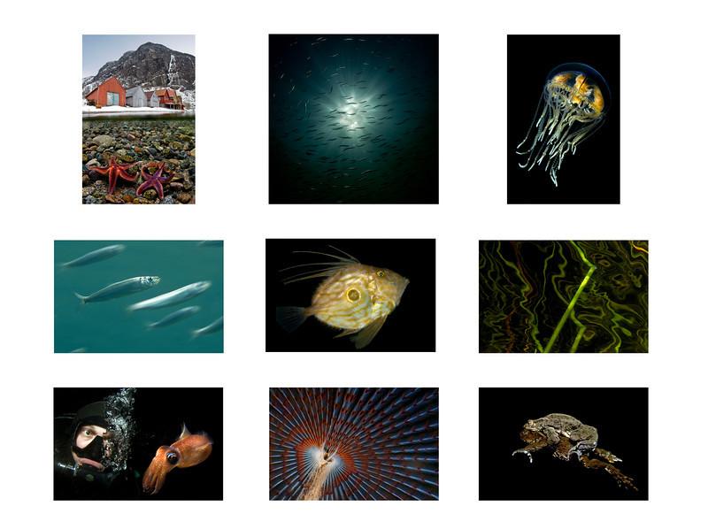 """Tobias blev trea, och därmed bäst placerade svensk, i Nordiska mästerskapen i undervattensfotografi 2010. Vann gjorde Christian Skauge, Norge följt av landsmaninnan Lill Haugen. Ovan ses några av Tobias tävlingsbidrag.<br /> <br /> Se resultat: <a href=""""http://iof3.idrottonline.se/ImageVaultFiles/id_23139/cf_104/NM-i-UV-foto%202010.pdf"""">http://iof3.idrottonline.se/ImageVaultFiles/id_23139/cf_104/NM-i-UV-foto%202010.pdf</a>"""