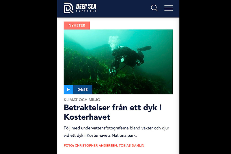 Betraktelser från ett dyk i Kosterhavet