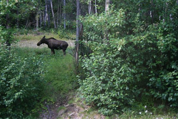 Alaska trip day 7-12