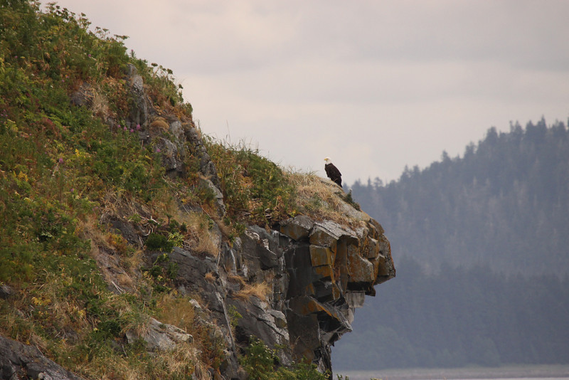 Lone Bald Eagle on an island spit