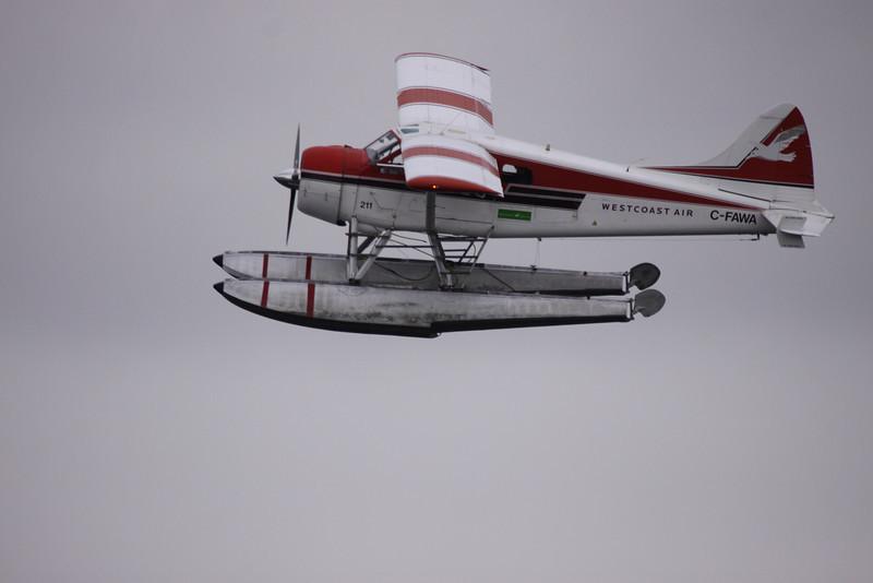 Sea planes are like gnats . . . everywhere!