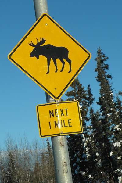 Sign in the city of Fairbanks...outside the city it goes without saying moose cross the roads