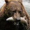 bear016