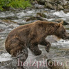 bear009