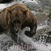 bear002