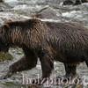 bear011