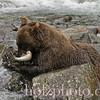 bear013
