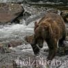 bear004