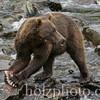 bear012