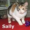 Sally was adopted from the Cat House and Adoption Center on Saturday, January 29, 2011.
