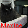 Maxine was adopted from the Cat House and Adoption Center on Saturday, February 12, 2011.