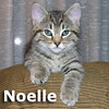 Noelle was adopted from the Cat House and Adoption Center on Saturday, December 18, 2010.