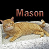 Mason, Barbara and Elaine (sisters) were adopted from the Cat House and Adoption Center on Saturday, February 12, 2011.