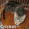 Cricket was adopted at South Bay Veterinary Hospital on Friday, February 11, 2011.