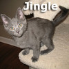 Jingle and Bells (brother and sister) were adopted from the Cat House and Adoption Center on January 17, 2011.<br /> <br /> Jingle <br /> <br /> Dashing and hansom this guy will make your spirit bright and bring joy and laughter to your life.