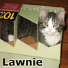 Lawnie was adopted from the Cat House and Adoption Center on Saturday, Dec. 11, 2010.