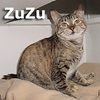 Zuzu was adopted from the Cat House and Adoption Center on Saturday, January 1, 2011.<br /> <br /> ZuZu<br /> <br /> Brains and beauty … one lucky lady<br /> <br /> This little girl, along with her friend, was evicted from her former home because her owners couldn't pay rent.  Living the good life is what she wants and deserves.