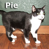 Turkey and Pie (brother and sister) were adopted from the Cat House and Adoption Center on Friday, January 14, 2011.<br /> <br /> Pie<br /> <br /> Who wants dessert?<br /> 		<br /> There is always room for a little Pie. She is sweet as candy and nice as her namesake. Make your meal complete and have a little Turkey with your Pie.