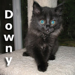 Downy was adopted from the Cat House and Adoption Center on Thursday, December 9, 2010.