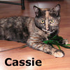 Cassie was adopted from the Cat House and Adoption Center on Saturday, January 15, 2011.<br /> <br /> Cassie<br /> <br /> Too cute for words …<br /> <br /> This adorable and ambitious kitten is ready to rumble and create kitten havoc.  She has her bags packed and is ready to roll right into your life … forever.
