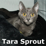 Tara was adopted from Olympia Veterinary Hospital on Friday, December 10, 2010.<br /> <br /> Tara Sprout<br /> <br /> Just add love...<br /> <br /> All this girl needs to grow is a loving place to call her home. Tara Sprout is a gentle and sweet girl that just wants a soft touch and she will blossom into her full argentine beauty.