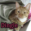 Dingle was adopted from the Cat House and Adoption Center on Saturday, January 22, 2011.<br />  <br /> Ring-A-Ding … Ding <br /> <br /> Dingle is full of personality and is a very handsome fellow with eyes that match his great coloring.  He is ready for visitors and will welcome your visit.  Dingle needs an indoor only home.