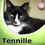 Tennille was adopted from the Cat House and Adoption Center on Saturday, Dec. 11, 2010.<br /> <br /> Captain and Tennille  <br /> <br /> Don't mess around. You just got to be strong and let love keep us together … forever. Rescued from being dumped in a local park by a loving and compassionate person, these two special cats owe their life to Jean but their hearts can belong to you.