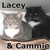 Cammie and Lacey were adopted from the Cat House and Adoption Center on Saturday, January 15, 2011.