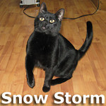 Snow Storm was adopted from the Cat House and Adoption Center on Thursday, January 13, 2011.