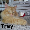 Trey was adopted from the Cat House and Adoption Center on Saturday, February 5, 2011.<br /> <br /> Trey<br /> <br /> One, two, three you'll agree …<br /> <br /> Meeting me is a delightful and pleasurable experience. I am young, playful, and ready to join a new family.