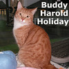 Buddy Harold Holiday was adopted from the Cat House and Adoption Center on Sunday, December 19, 2010. <br /> <br /> Buddy Harold Holiday<br /> <br /> There's always room at the Holiday Inn<br /> <br /> Buddy was rescued by a volunteer at a local inn and he is very grateful. This handsome fellow is so glad to be where it is warm and he looks forward to having visitors.