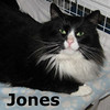 Jones was adopted from the Cat House and Adoption Center on Saturday, January 29, 2011.<br /> <br /> January Jones<br /> <br /> Running free and escaping the dangers of the great outdoors is over for Jones. He is grateful to be enjoying safety and security while he awaits his forever home.