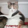 Dominos (No-Nos) was adopted from the Cat House and Adoption Center on Tuesday, December 21, 2010.
