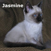 Jasmine was adopted from the Cat House and Adoption Center on Saturday, January 29, 2011.