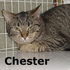 Chester was adopted from the Cat House and Adoption Center on Sunday, January 23, 2011.