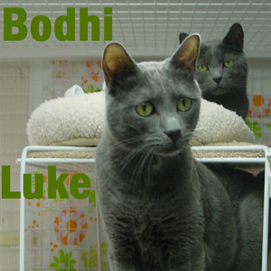 Bodhi and Luke were adopted from the Cat House and Adoption Center on Friday, December 31, 2010.