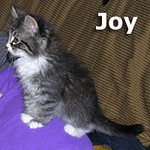 Joy and Moose (sister and brother) were adopted from the Cat House and Adoption Center on Saturday, December 18, 2010.