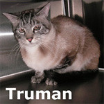 Truman was adopted from the Cat House and Adoption Center on Friday, January 7, 2011.