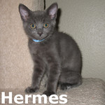 Hermes and Apollo (siblings) were adopted together from Steamboat Animal Hospital on Saturday August 6, 2011.